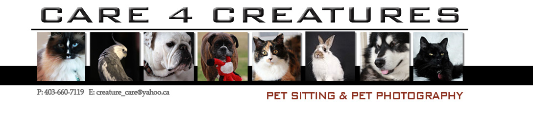 Care 4 Creatures Pet Sitting Calgary